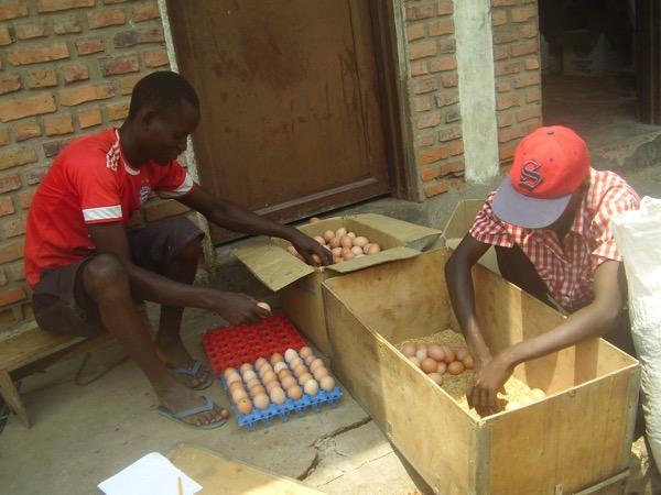 ... à la vente des œufs et à une certaine autonomie ...